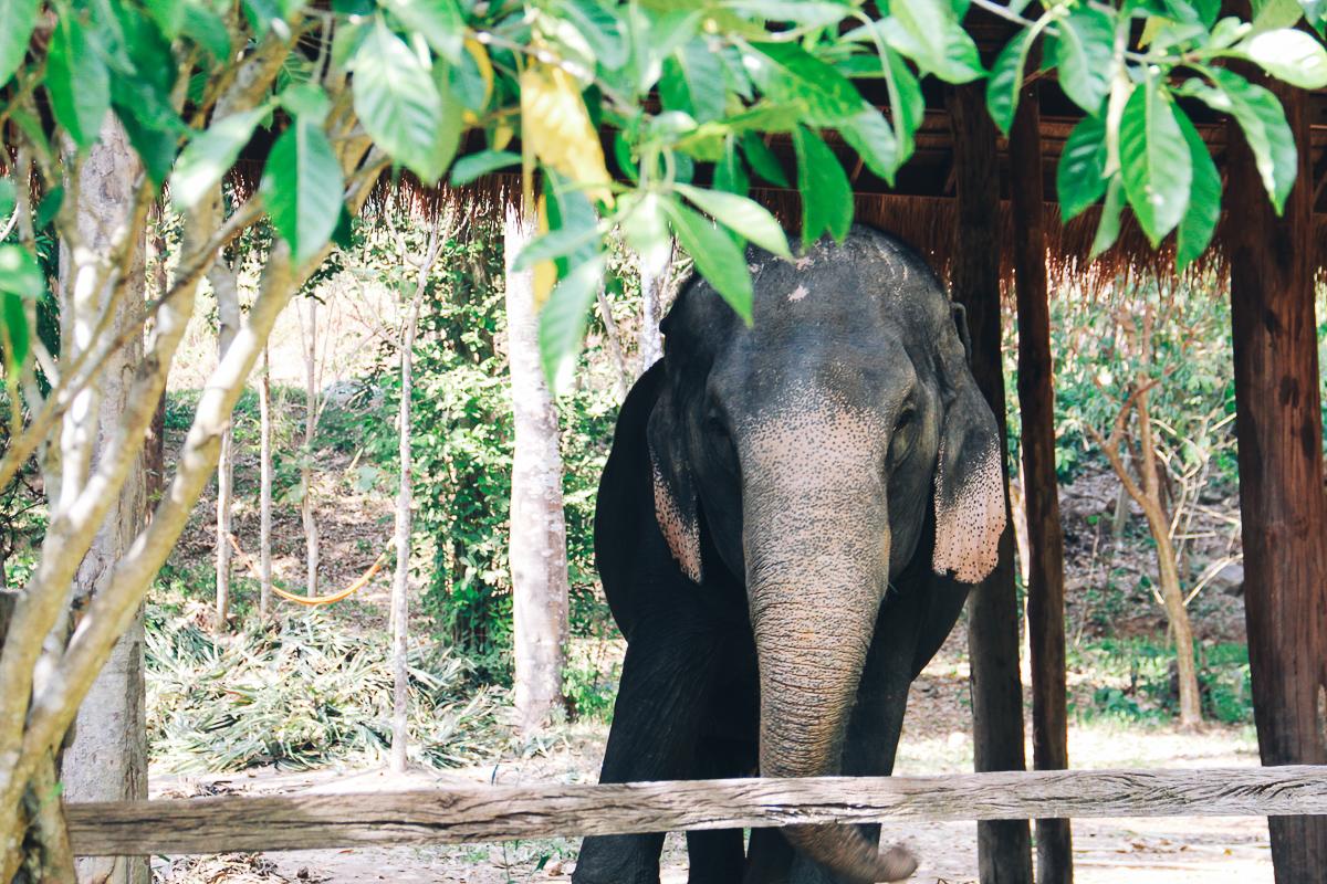 Thailand-fotografie-reisfotografie35